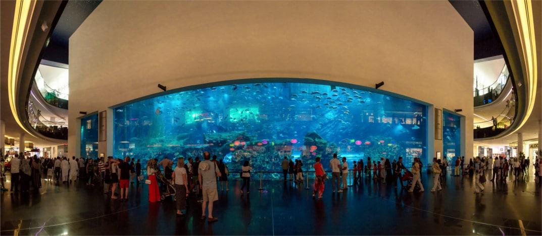 aquarium cropped